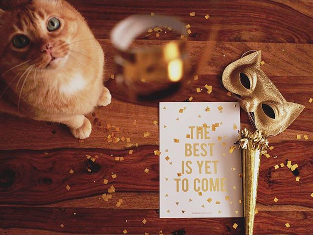 gato-navidad-bodas-de-cuento www.bodasdecuento.com